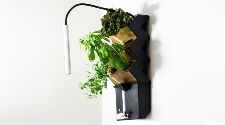 Feast on healthier produce by growing your own food with Green Thumb Technology